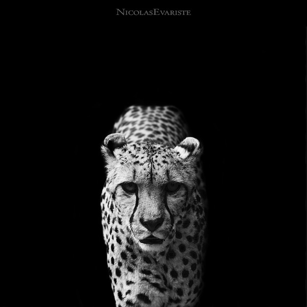 nicolas-everiste-dark-zoo-1